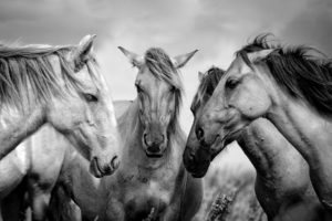 Antidotes for The Four Horsemen - Boyle Counseling